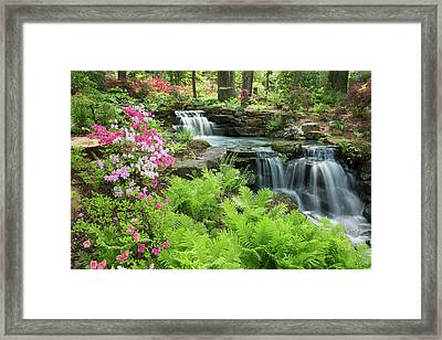 Waterfall With Ferns And Azaleas Framed Print