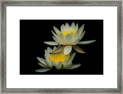 Waterflower Framed Print