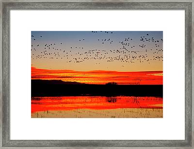 Waterfowl On Roost At Sunrise, Bosque Framed Print by Larry Ditto