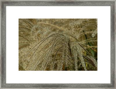 Waterfront Framed Print by Joseph Yarbrough