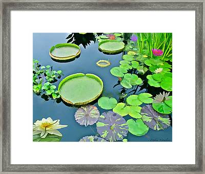 Watergarden  Framed Print by Debra     Vatalaro