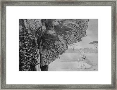 Waterhole Framed Print by Tim Dangaran