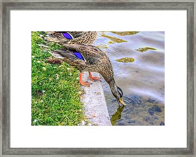 Watering Hole Framed Print by Rob Sellers