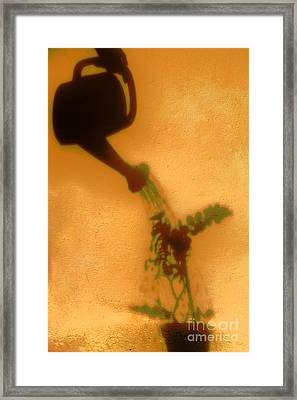 Watering Plant Framed Print