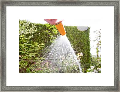Watering With A Garden Hose Framed Print