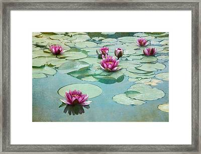 Waterliles Framed Print by Carolyn Dalessandro