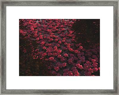 Waterlilies 2 Framed Print