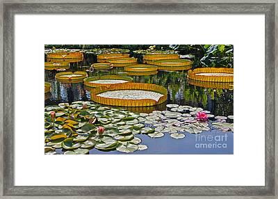Waterlilies All -- Version 2 Framed Print by Byron Varvarigos