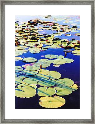 Waterlilies Framed Print by Jan Amiss Photography