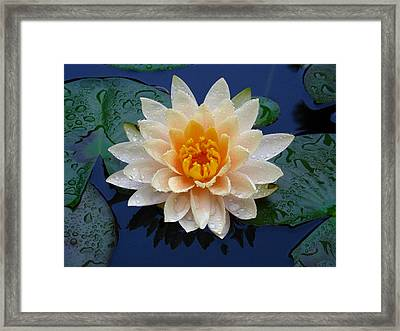 Waterlily After A Shower Framed Print by Raymond Salani III