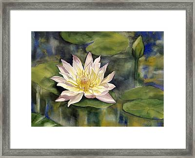 Waterlily Framed Print by Alfred Ng