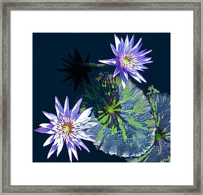 Waterlily And Pads Framed Print by Debra     Vatalaro