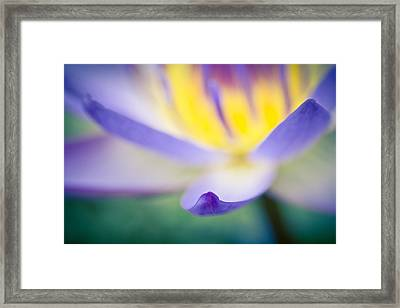 Waterlily Dreams 6 Framed Print