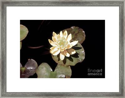 Waterlily II Framed Print by Linda  Parker