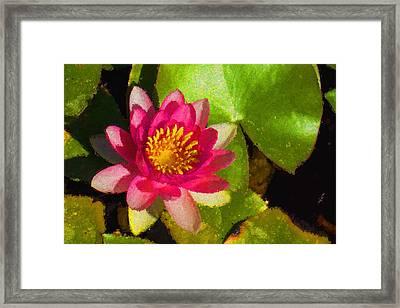 Waterlily Impression In Fuchsia And Pink Framed Print by Georgia Mizuleva