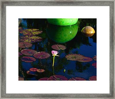 Waterlily Reflection Framed Print