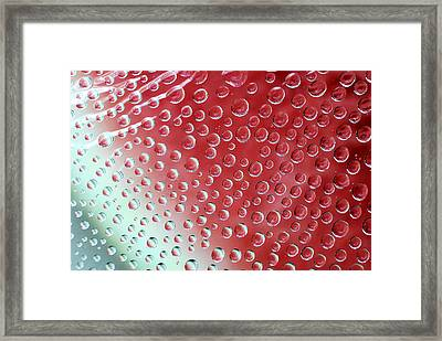 Watermelon Wrapping Framed Print