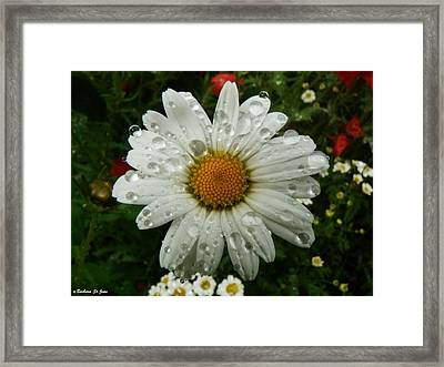 Watery Daisy Framed Print by Barbara St Jean