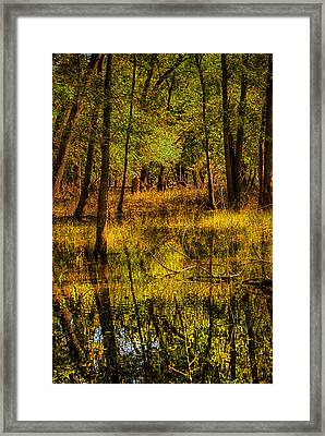 Framed Print featuring the photograph Watery Ramble by Kimberleigh Ladd