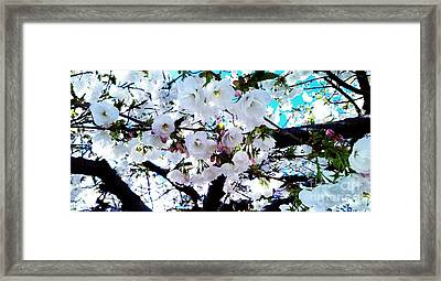 Framed Print featuring the photograph Blanche by Vanessa Palomino