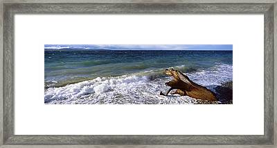 Waves And Driftwood On The Beach Framed Print by Panoramic Images