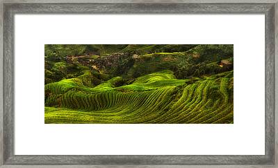 Waves Of Rice - The Dragon's Backbone Framed Print