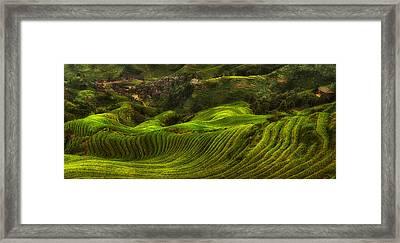Waves Of Rice - The Dragon's Backbone Framed Print