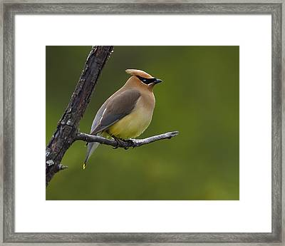 Wax On Framed Print by Tony Beck