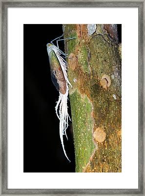 Wax Tailed Bug Framed Print