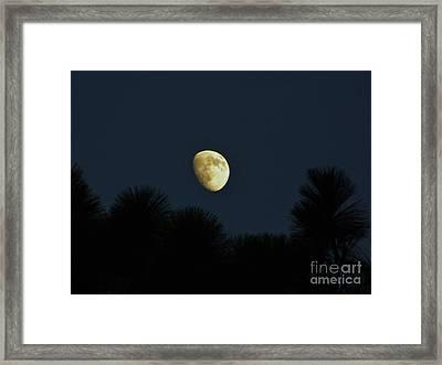 Waxing Moon Over Florida Framed Print by D Hackett