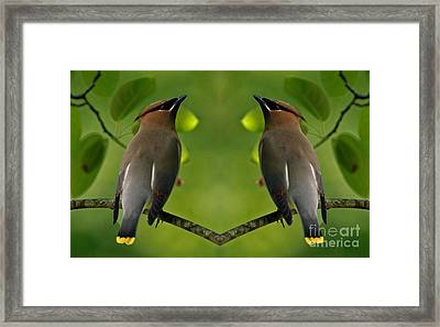 Waxwing Love Framed Print by Inspired Nature Photography Fine Art Photography