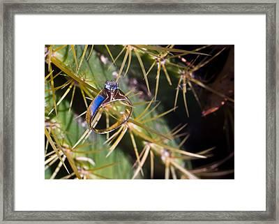 Wdding Ring And Cactus Spines 5 Framed Print by Douglas Barnett