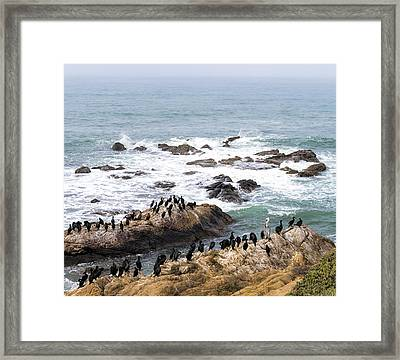 We All Can Get Along Framed Print