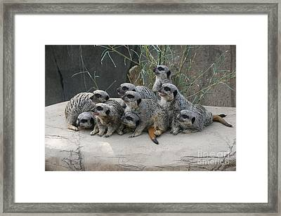 We Are Family Framed Print by Judy Whitton