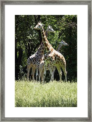 We Are Family Framed Print