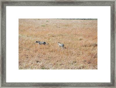 We Are Out Of Here Framed Print