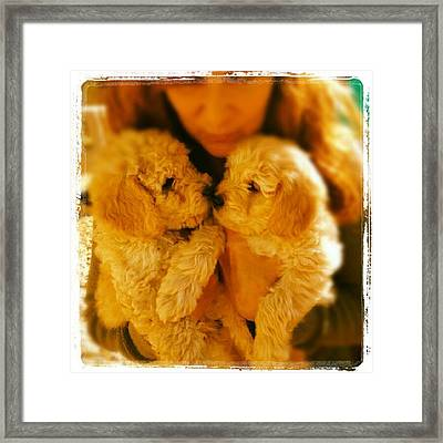 Two Adorable Puppies Framed Print