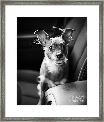 We Goin For A Ride Framed Print by Edward Fielding