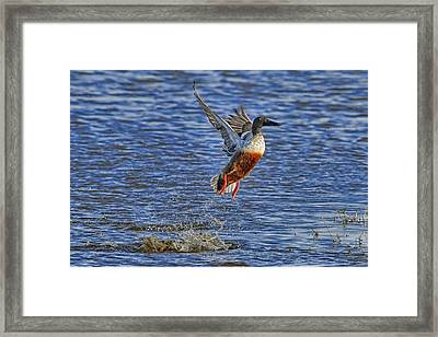 Framed Print featuring the photograph We Have Liftoff by Gary Holmes