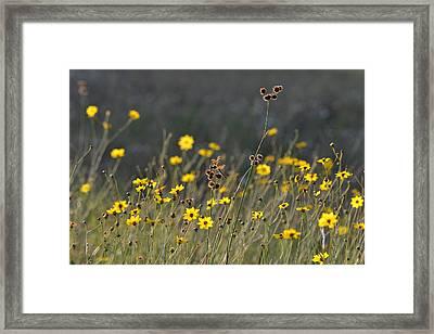 We Kissed The Lovely Grass Framed Print by Melanie Moraga