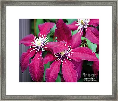 We Love To Climb Framed Print by Lorraine Louwerse