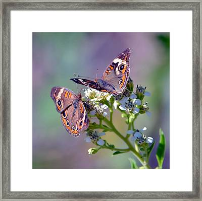 We Make A Beautiful Pair Framed Print