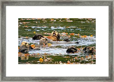 We Otter Be In Pictures Framed Print