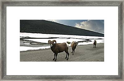 We Roam Framed Print by Shirley Sirois