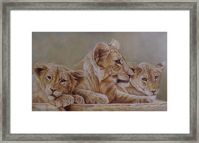 We Three Will Be Kings... Framed Print by Pauline Sharp