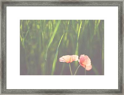 We Will Remember Them ... - Fine Art Red Poppy Nature Photograph Framed Print