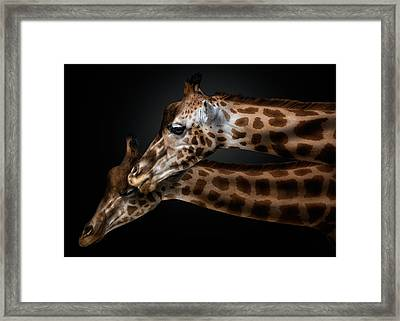 We Will Survive Framed Print by Pedro Jarque
