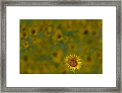 We Worship The Sun Framed Print by Susan Candelario