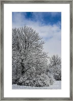Wealth Of Snow After Nemo Framed Print by Deborah Smolinske
