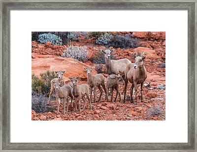 Weary Moms  Framed Print